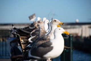 Potentially aroused seagulls